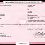 Asha's Heart Certificate