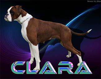 clara-glamour