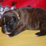 hanna-pup_0019