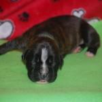 hanna-pup_0046