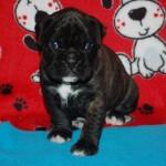 minni-pup-3w_0166