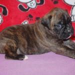 minni-pup-3w_0203