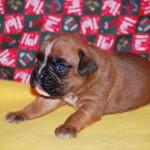 minni-pup2w_0104