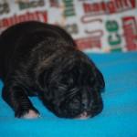 minni-pup_0016