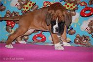 destiny-puppy