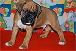 minni-samy-puppy-th