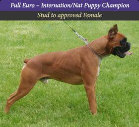Gunner Euro boxer sire