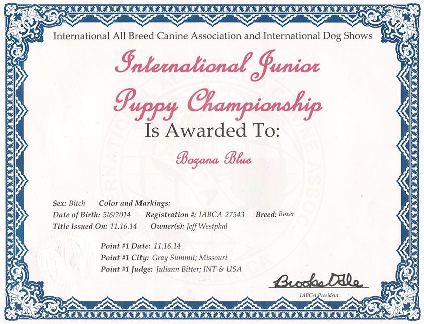 Nikita Intnat jr puppy
