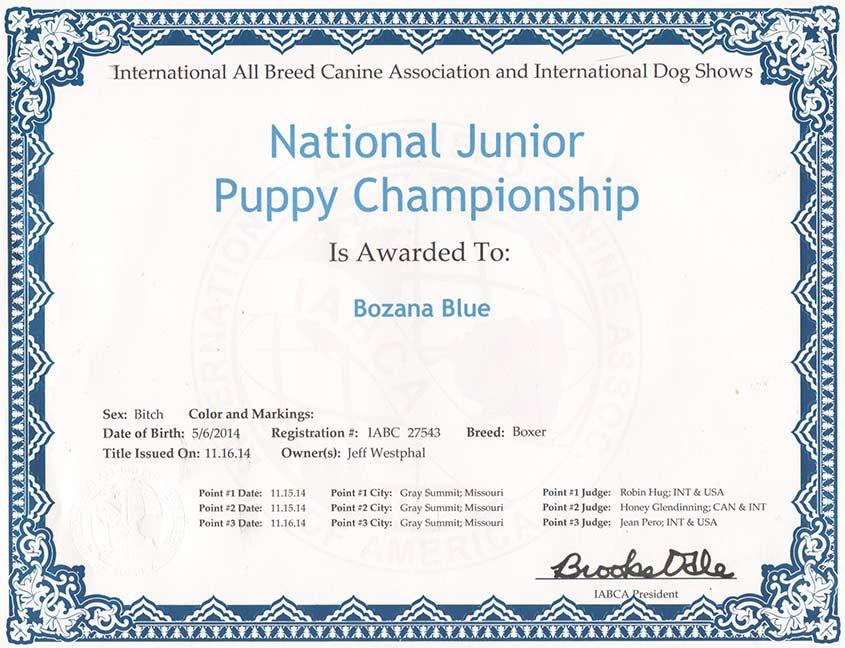 Nikita-nat-jr-puppy
