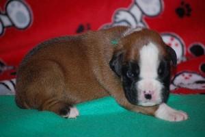 puppies-2-week-04