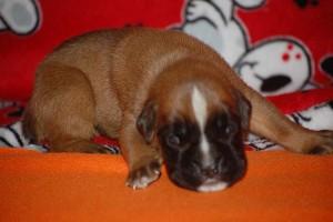puppies-2-week-05