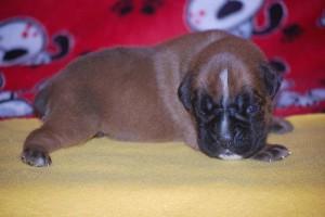 puppies-2-week-08