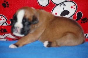 puppies-2-week-10