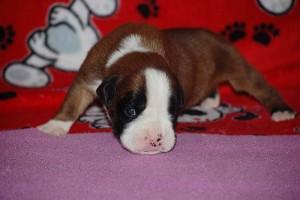 puppies-2-week-14