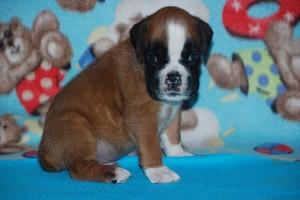 puppies 4-weeks01