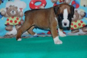 puppies 4-weeks04