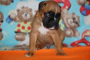 puppies 4-weeks05