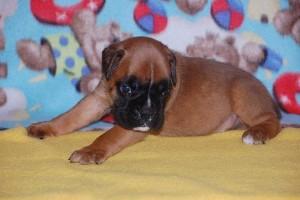 puppies 4-weeks07