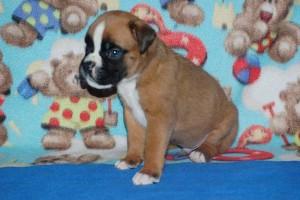puppies 4-weeks10