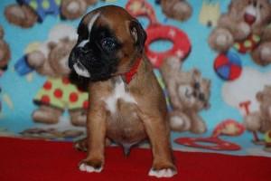 puppies 4-weeks12