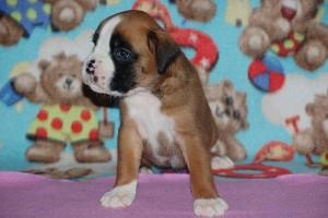 puppies 4-weeks14