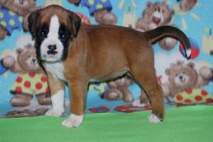 puppies 4-weeks15