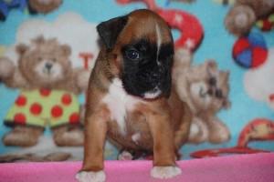 puppies 4-weeks17