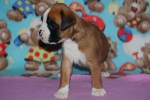 puppies 4-weeks20