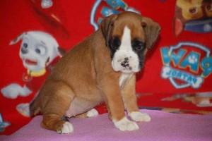 puppies 5-weeks13