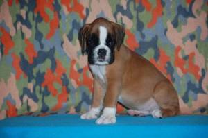 puppies-7-weeks16