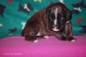 3-week-oldpuppies10