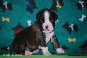 3-week-oldpuppies14