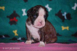 3-week-oldpuppies15