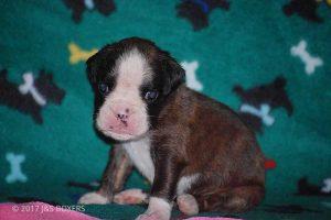 3-week-oldpuppies16