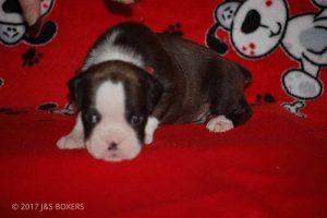 Feb-Puppies14