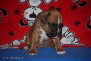 Feb-Puppies15