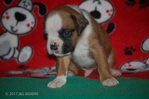 Feb-Puppies17