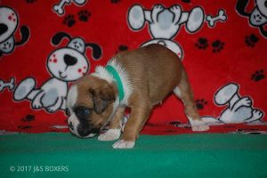 Feb-Puppies18