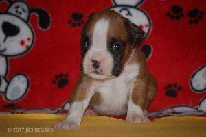 Feb-Puppies19