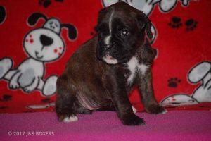 Feb-Puppies21