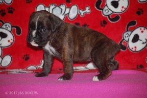 Feb-Puppies22