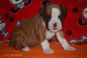 Feb-Puppies23