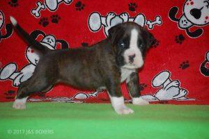 Feb-Puppies25