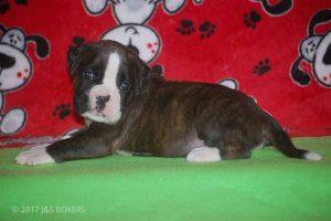 Feb-Puppies26