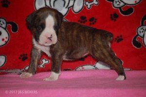 Feb-Puppies27