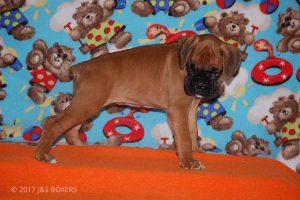 Feb-Puppies40