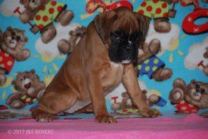 Feb-Puppies42
