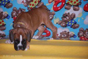 Feb-Puppies43