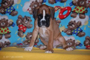 Feb-Puppies44