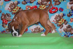 Feb-Puppies45